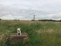 Poppy on her walk at the Waters Edge Country Park